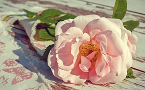 Picture flower, leaves, light, flowers, pink, Board, rose, roses, petals, Bud, fabric, one, gentle, composition
