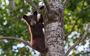 Picture tree, baby, bear