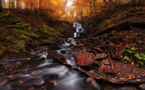 Picture autumn, leaves, trees, Ukraine, Carpathians, Transcarpathia, mountain Shypit waterfall