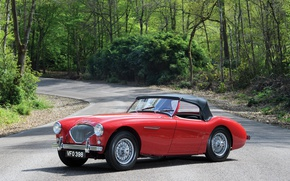 Picture road, trees, red, retro, Red, car, Austin, Healey