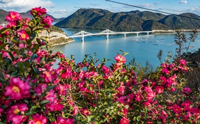 Picture flowers, mountains, bridge, Strait, Japan