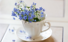 Wallpaper Cup, forget-me-nots, blur