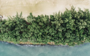 Picture sand, sea, beach, palm trees, the ocean, coast, Singapore, resort, the view from the top, ...