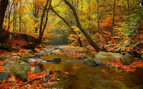 Picture Autumn, Trees, Forest, Stones, Fall, Foliage, River, Autumn, Colors, River, Forest, Trees, Leaves