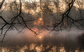 Picture the sun, branches, fog, morning, silence, ☀