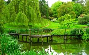 Picture summer, trees, Park, river, England, the bridge, trees, park, bridges, England, sezincote