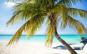 Picture sea, beach, Tropics