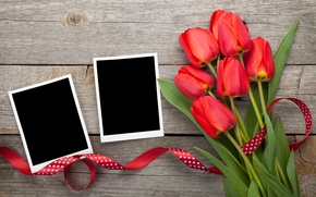 Picture bouquet, tulips, red, tulips