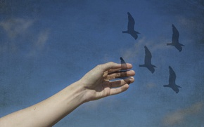 Picture the sky, birds, the world, hand