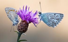 Picture flower, macro, butterfly, cornflower