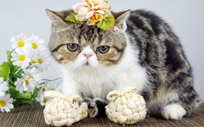 Picture cat, cat, look