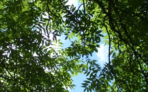 Picture summer, the sky, trees, foliage