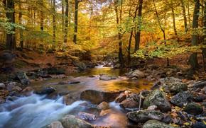 Picture autumn, landscape, nature, river, stream