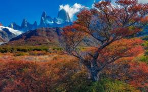 Picture autumn, trees, mountains, Argentina, Santa Cruz