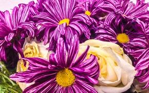 Picture Flowers, Nature, Bouquet, Flora