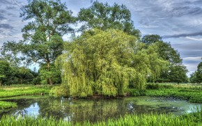 Picture greens, landscape, nature