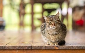 Picture cat, Board, floor