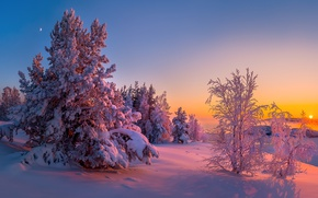 Picture winter, snow, trees, sunset, Lake Ladoga, Karelia