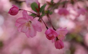 Picture nature, Spring, flowering