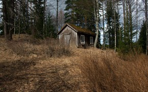 Picture forest, nature, house