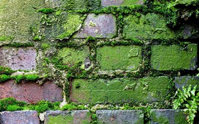 Picture greens, grass, moss, texture, old wall, brickwork