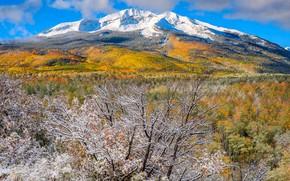 Picture autumn, snow, trees, mountains, Colorado, USA, Aspen