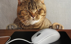 Wallpaper cat, look, face, table, the situation, paws, mouse, claws, wire, Mat, computer