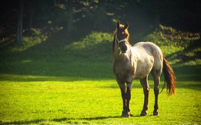 Picture greens, summer, grass, the sun, trees, glare, glade, horse, bokeh