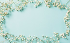 Picture flowers, background, frame, white, white, flowers, spring, frame, floral
