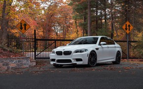 Picture BMW, White, Autumn, F10