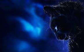 Picture cat, mustache, background, fantasy, art, profile