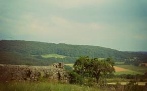 Picture landscape, nature, tree