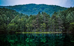 Picture nature, reflection, forest, pond