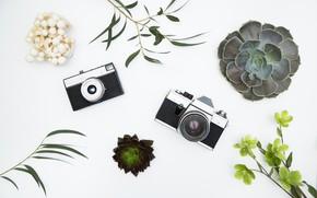 Picture background, Flowers, technique, Cameras