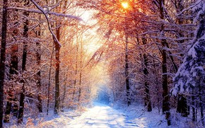 Picture The sun, Nature, Winter, Road, Trees, Snow, Forest, Branches