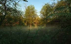 Picture forest, summer, glade, vegetation, Into the Woods