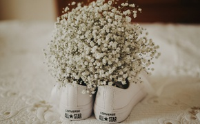 Picture flowers, shoes, sneakers, converse