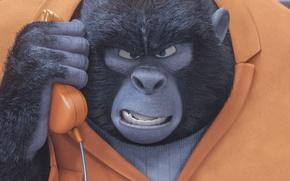 Picture cinema, movie, animal, gorilla, film, animated film, uniform, seifuku, animated movie, family, jail, Sing