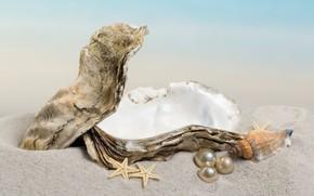 Picture sand, shell, pearl, starfish, sunshine, beach, sea, sand, seashell