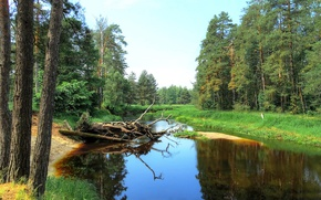 Picture forest, river, pine