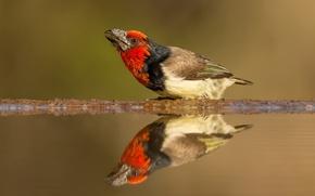 Picture animals, water, reflection, background, bird