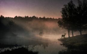 Picture fog, river, deer