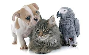 Picture cat, parrot, puppy, bulldog, friends, puppy, cats, parrots