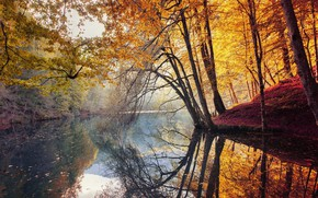 Picture Nature, Water, Colorful, Trees