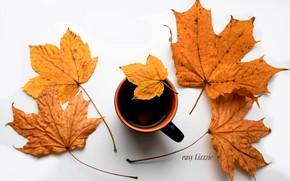 Picture autumn, tea, leaf, autmn, tree leaf, cup of tea