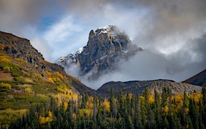 Picture forest, landscape, mountains, mountain