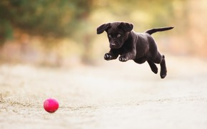 Picture the game, the ball, dog, puppy