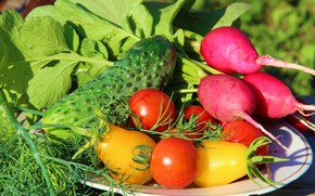 Picture cucumber, vegetables, radishes