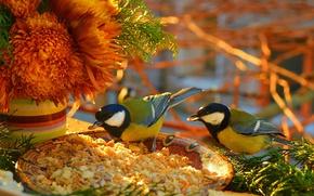 ... Picture Flowers, Flowers, Tits, Crumbs, Birds, Birds ...