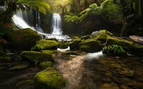 Picture nature, river, stones, waterfall, jungle, Tasmania